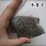 乳腺炎や乳腺炎の予防に使うゴボウの種:牛蒡子(ゴボウシ)